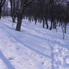 『雪山だけど春の大山!!』の画像