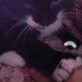 子ネコが前足を私の手に乗せてきた。そっと乗せ返す → 子猫、負けません…