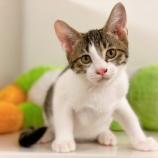 『【子猫】3頭 里親募集を開始いたしました』の画像