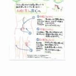 『東洋医学と養生④:胃腸の冷えのお灸』の画像