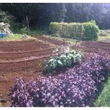 『めいわ畑種蒔き準備完了』の画像