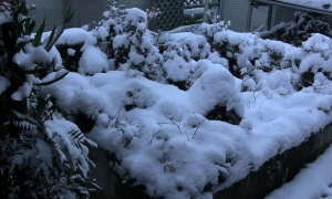 北海道にある発達した低気圧の影響で東海地方でも大雪(写真・動画あり)