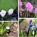 『我が家の庭も!花!花!蝶!』の画像