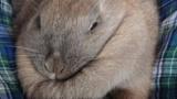 ウチのうさぎさん、ハマる(※画像あり)