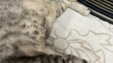 猫にストーブ取られた!(※画像あり)