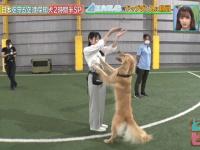 【日向坂46】おひさま「犬はいいよなぁ・・・・」