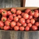 『お客様からトマトいただきました!』の画像