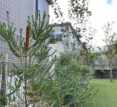 庭の植物たちと美味しいもの記録