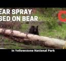 ハイキング中の少年の後ろにクマ、動画が話題