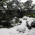 『今冬はじめての積雪なのに、すでに春の雪😿』の画像