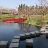 『'2019お花見🌸~朱雀の庭(京都)』の画像