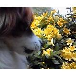 『子犬とジャスミンの香り』の画像