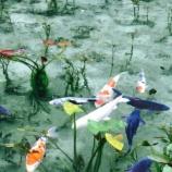 『春・夏の「モネの池」(岐阜県関市)へマイカーで行く人は必見!これは都会では味わえないですね。』の画像