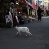 『代田橋 沖縄タウン』の画像