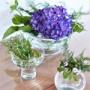 震える手で1年越しに決断した大物ラグ!リビング初夏のインテリア♪紫陽花で爽やかに。