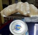 【画像】世界最大とみられる巨大天然真珠、約100億円 フィリピンの漁師が発見