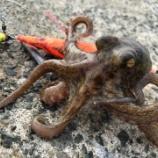 『【オクトパッシング】タコ釣り2年目のボクがタコの釣り方、タックルを解説するよ!』の画像