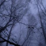 『山梨のキャンプ場で行方不明になった女の子の謎』の画像