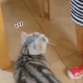 ネコが心配してやってきた。大丈夫? → 泣いている女の子に優しい猫はこうします…