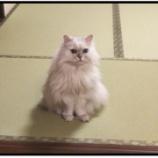 『何度でも言う、猫はカワイイ』の画像
