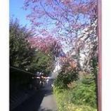 『秋晴れ』の画像