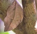 枯葉そっくりな蝶が存在するのは、そういうのだけ生き残ったから←これおかしくね