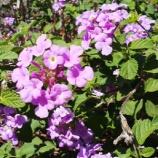 『誇らしげに咲く花』の画像