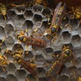 『8月14日 2階の換気口に蜂の巣発見!』の画像