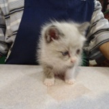 うちの猫「レオン」の特選写真集の写真