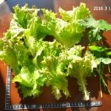 『私のマイクロバブル生活研究(20)・野菜生活①』の画像