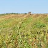 『雑誌取材・蕎麦の刈り跡』の画像