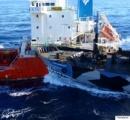 シーシェパードの妨害行為「永久に禁止」 日本の調査捕鯨で和解するも…