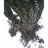 『この木いいなあ』の画像