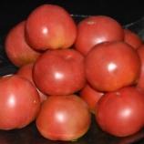 『国東の食環境(131)トマト』の画像
