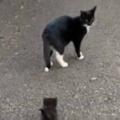 母ネコが飼い主の後を追う。とことことこ♪ → その後ろから子猫たちもこんな感じ…