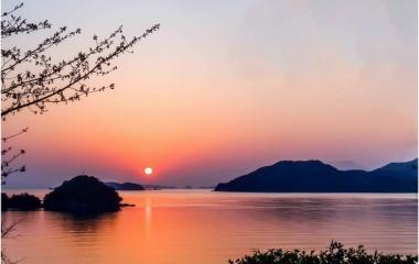 『夕日と河津桜』の画像