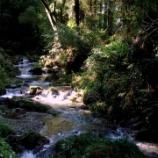 『「林道笹郷線」~前半と後半で雰囲気ががらりとかわる林道~』の画像