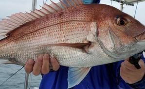 60cm以上も! 遊漁船での釣果を報告