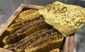 貴重なニホンミツバチの蜂蜜
