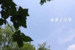 妙見の森のスキマから 【カタノソラNo.3】