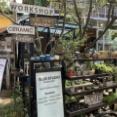 【旅】 週末プチ旅行 チェンマイ編 日曜限定モーニングマーケットに行ってきました バーン カーン ワット