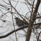 『バードフィーダーなしで楽しめる野鳥観察 ~冬を乗り切る野鳥たち~』の画像