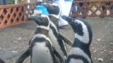 道程やけど水族館行ってペンギン見てきたで(※画像あり)