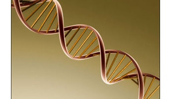 世界驚愕の遺伝子研究! なんと秘密裏に人間と動物の混合種が150以上も作られていた