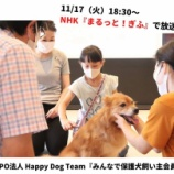 『\11月17日(火)18:30~ 『NHKまるっと!ぎふ』で放送/ Happy Dog Teamのこれからの犬との暮らし方 『みんなで保護犬飼い主会員』』の画像