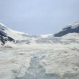 【画像】永久凍土から発見された1万8000年前の犬がこちらwwwwwww