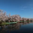 『臥竜山の桜 2019/4/20』の画像