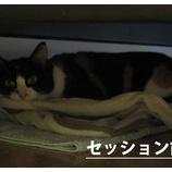 『野良猫ちゃん、里親に迎えられた気持ちって・・・?パート1』の画像