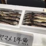 『千丈ヶ滝養魚場』の画像