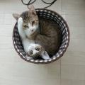 【画像】うちの猫がかわいいんだけど